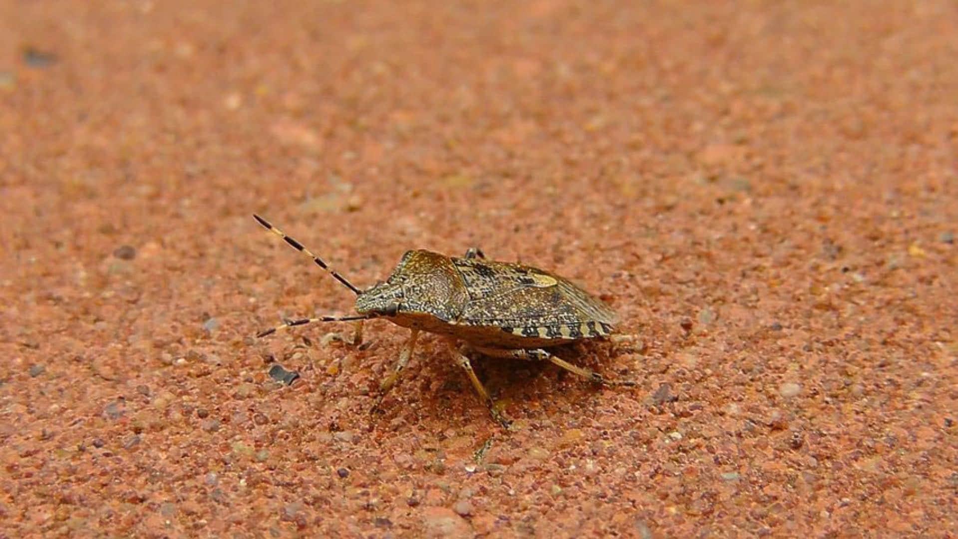 Top 9 Ways To Keep Stink Bugs Away The Pest Rangers